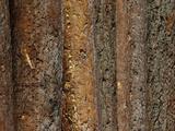 Close-up of Dark Brown Rough Tree Bark