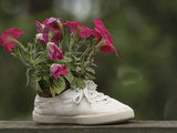 A White Shoe Used as a Flower Pot with Pink Blossoms