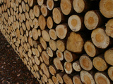 Close-up of Many Cut Logs in a Pile