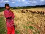 Shepherd Girl with Sheep  Amrit  Syria