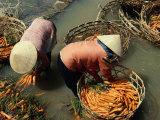 Women Washing Carrots in River Water Da Lat  Lam Dong  Vietnam