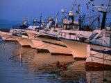 Fishing Boats in Porto Calasetta  Sant' Antioco  Sardinia  Italy