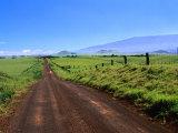 A View of Mauna Kea from the Road Leading Through Parker Ranch  Waimea  Hawaii  USA