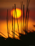 Sunset Silhouette of Bungalow Roof  Pulau Nias  North Sumatra  Indonesia