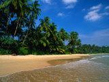 Palm Trees on Mirassa Beach  Weligama  Sri Lanka