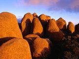 Dolerite Boulders at Mt Wellington  Tasmania  Australia