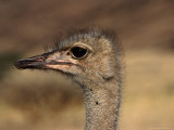 Ostrich's Head  Central Highland  Namibia