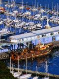 Chaeffers Marina at Oriental Bay  Wellington  Wellington  New Zealand