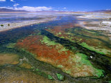 Thermal Hot Springs' Run-Off on Altiplano  Lake Verde  Bolivia