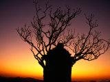 Tree in Sunset Silhouette  Hampi  Karnataka  India