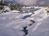 Snow on Franklin River  Cradle Mountains  Lake St Clair National Park  Tasmania  Australia