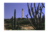 The California Lighthouse with Cactuses Aruba