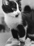 A Nervous Looking Kitten