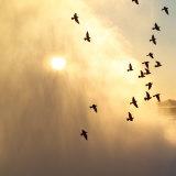 Birds Flying Above Niagara Falls  Ontario  Canada