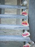 Steps  Caye Caulker  Belize
