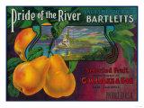 Pride of the River Pear Crate Label - Locke  CA