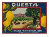 Questa Lemon Label - Corona  CA
