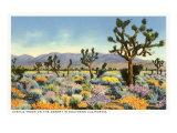 Joshua Trees in Desert  California