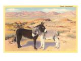 Desert Sweethearts  Nuzzling Burros
