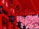 Heian Shrine in Spring  Shinto  Kyoto  Japan