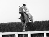 Arkle Racehorse Wins the Gold Cup in 1966 Jumps Fence