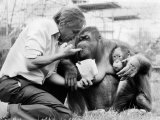 David Attenborough with Orang-Utang and Her Baby at London Zoo  April 1982
