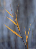 Close View of a Stalk of Grass in Grass River Provincial Park