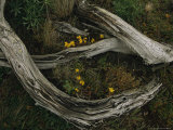 Yellow Wildflowers Blooming Around a Decaying Log