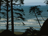 View Through Silhouetted Evergreen Trees at Gentle Pacific Surf