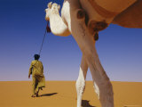 Tuareg Guide Leads His Camel into the Desert Papier Photo par Bobby Model