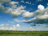 Cloud-Filled Sky over Lush Green Grassland