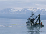Trawler Fishes For Pink Salmon