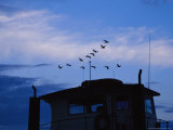 Canada Geese Flying High over a Boat at Twilight