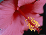 Close View of a Hibiscus Flower