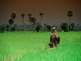 Boy on Buffalo in Rice Field