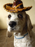 Dog Wearing Sombrero