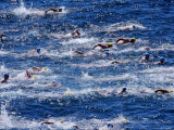 Bondi to Bronte 3Km Ocean Swim