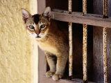 Cat Climbing Through Window