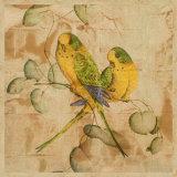Songbirds I