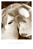 Fleur No 3