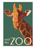 Visit the Zoo  Giraffe Up Close
