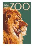 Visit the Zoo  Lion Up Close