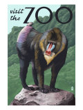 Visit the Zoo  Mandrill Scene