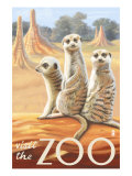 Visit the Zoo  Meerkats Scene