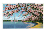 Washington DC  View of the Washington Monument with Blossoming Cherry Trees