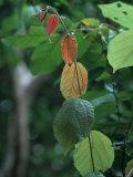 Rainy Season Vegetation  Gombe National Park  Tanzania