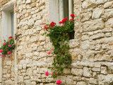 Old Stone House  Istria  Croatia