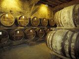 Aging of Armagnac in Gascony Oak Barrels  Aquitania  France