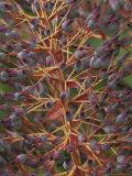 Bromeliad  Maui  Hawaii  USA