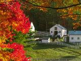 Morning Chores at the Imagination Morgan Horse Farm  Vermont  USA